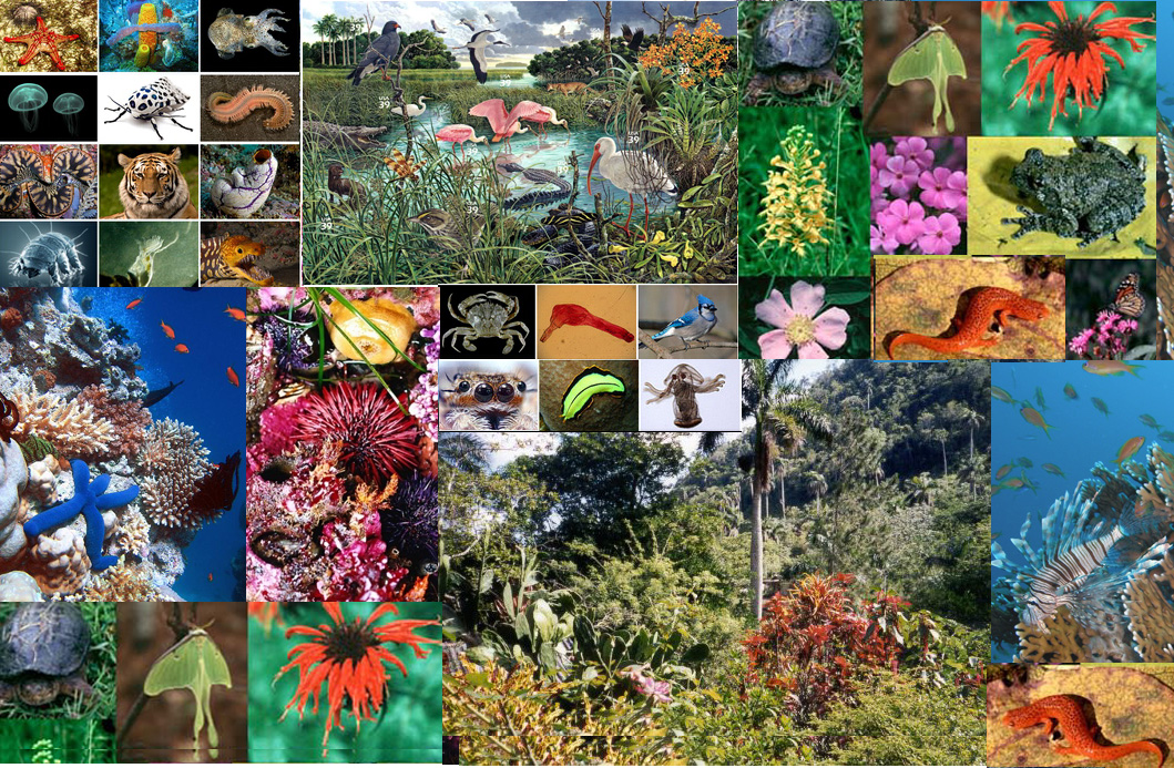 biodiversity of plants and animals pdf