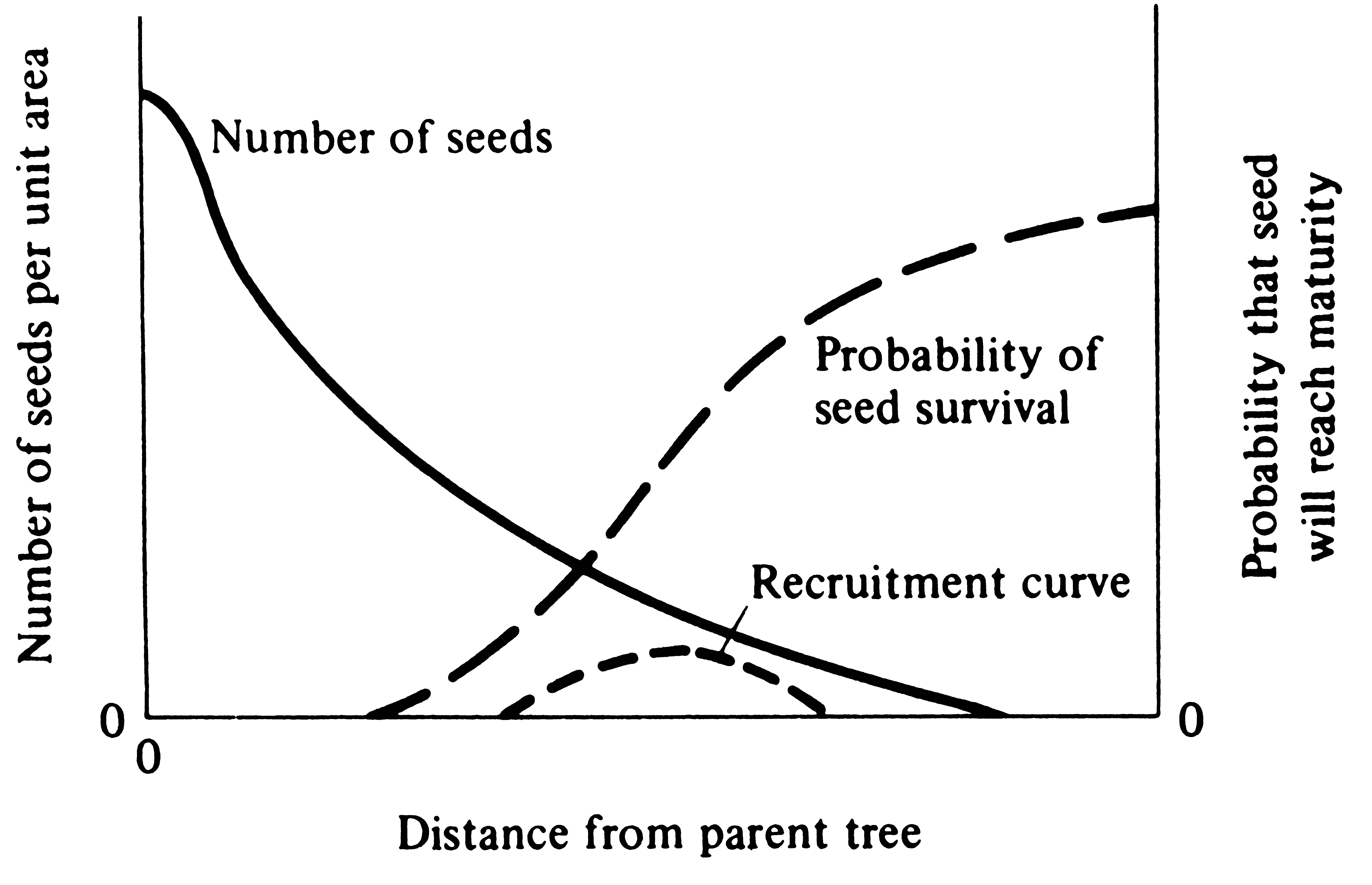 15 predation and parasitism hypothetical model of seed recruitment versus distance from the parent tree near the tree all seeds are eaten by seed predators at increasing distances pooptronica