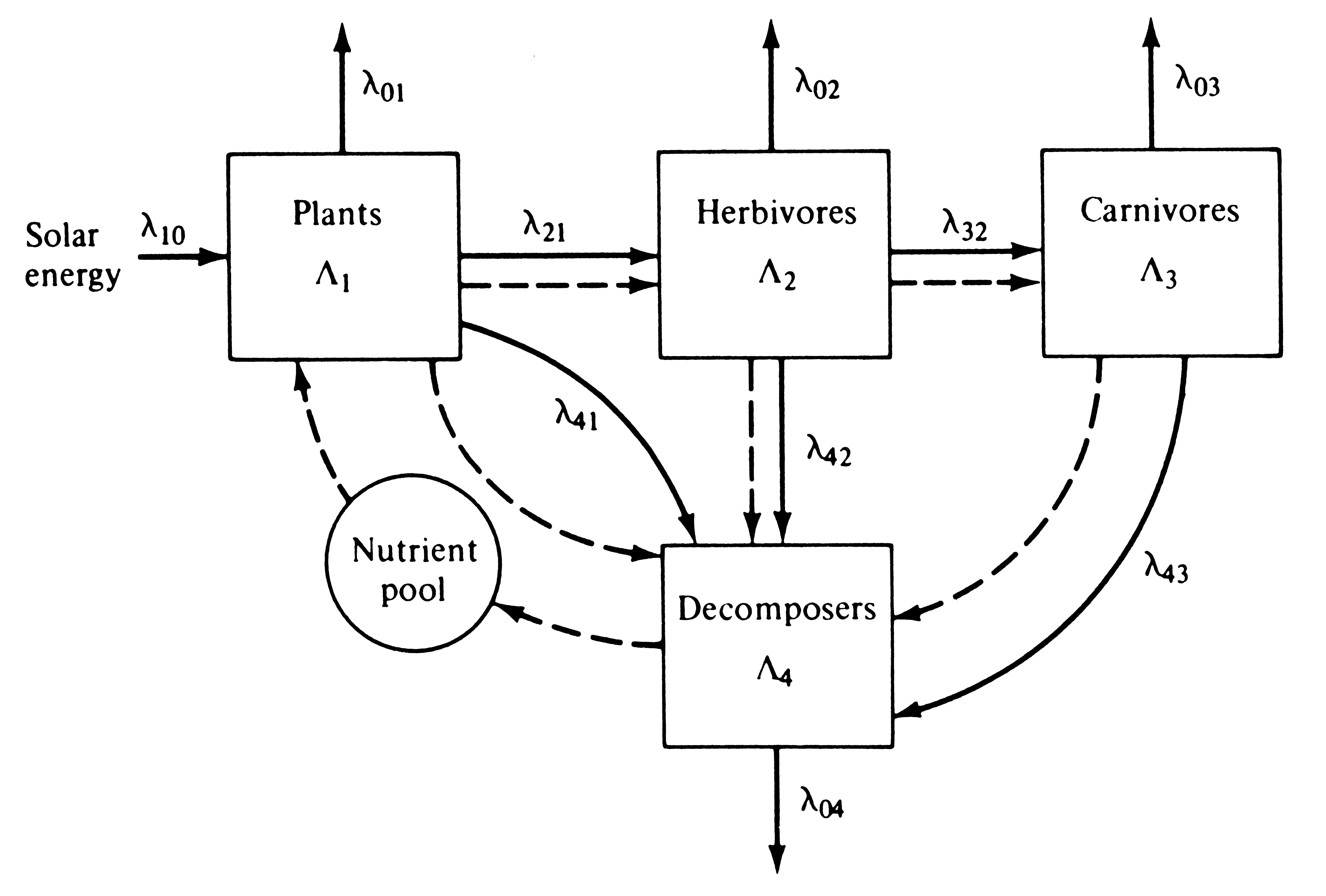 Ecosystem energy flow diagram ace energy another compartment model of an ecosystem energy flow is shown with solid arrows and the flow pooptronica Image collections
