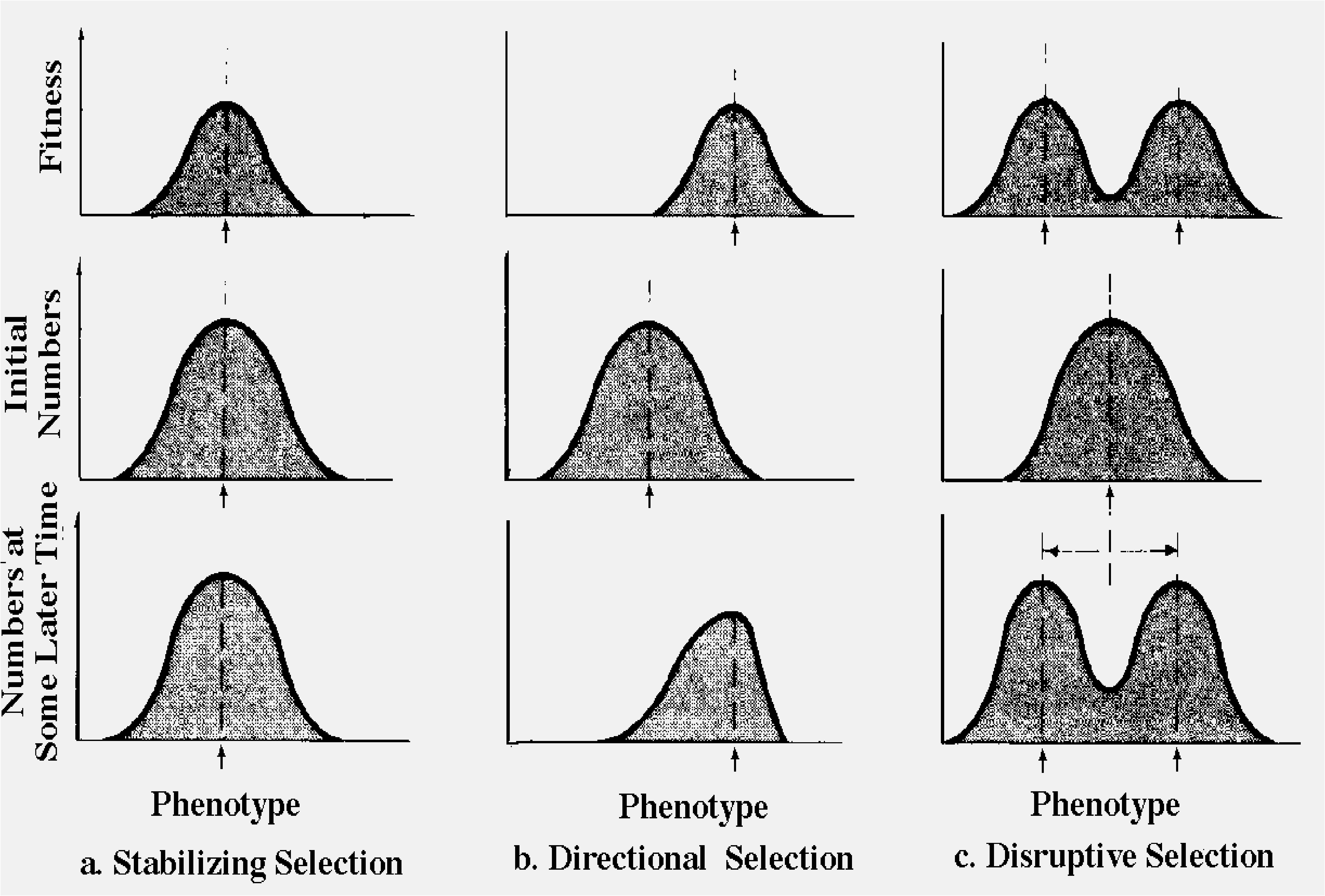 Phenotypic Selections In Nature