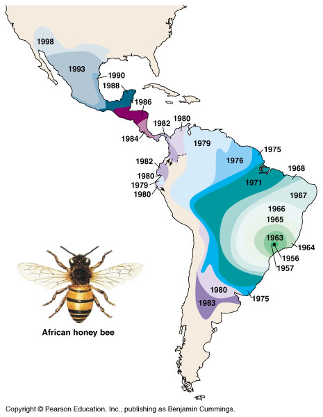 Spread Of The African Honey Bee In The Americas The Africanized Honey Bee Was First Introduced To Brazil In The 1950s In An Effort To Increase Ho