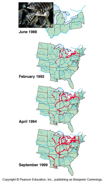 Zebra Mussels Map And