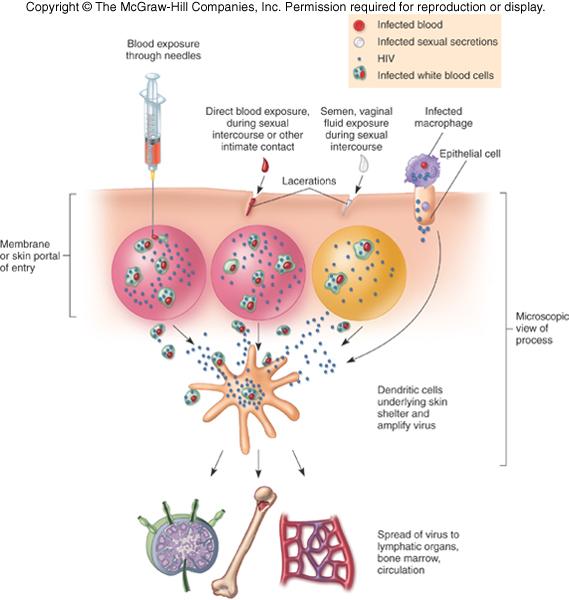 Does herpes transmit through saliva