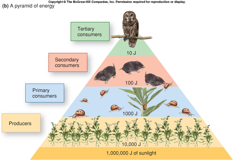 flow of energy Section 3–2 energy flow (pages 67–73) teks focus: 9d flow of matter and energy through different trophic levels 12e food chains, food webs, and food pyramids.