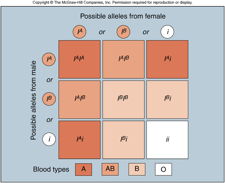 Abo blood group genetics queen! anyone