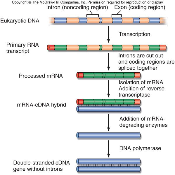 Gene Technol... Reverse Complement Dna