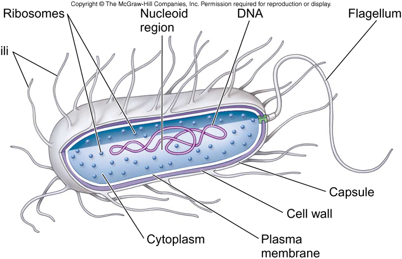 f5.9 cells