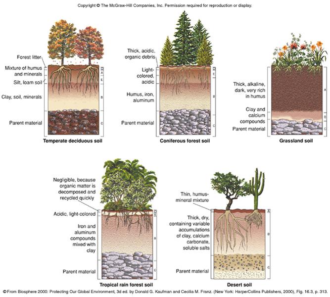 Aquatic Habitats and Terrestrial Biomes