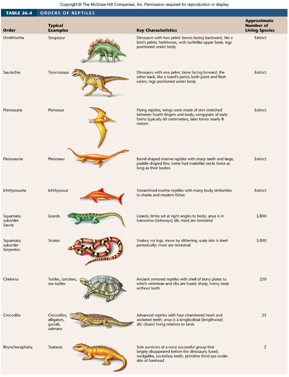 the characteristics of reptiles and its species