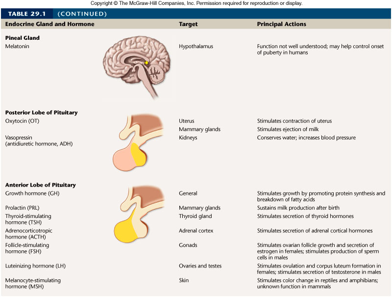 Endocrineglands Table Jpeg Credited